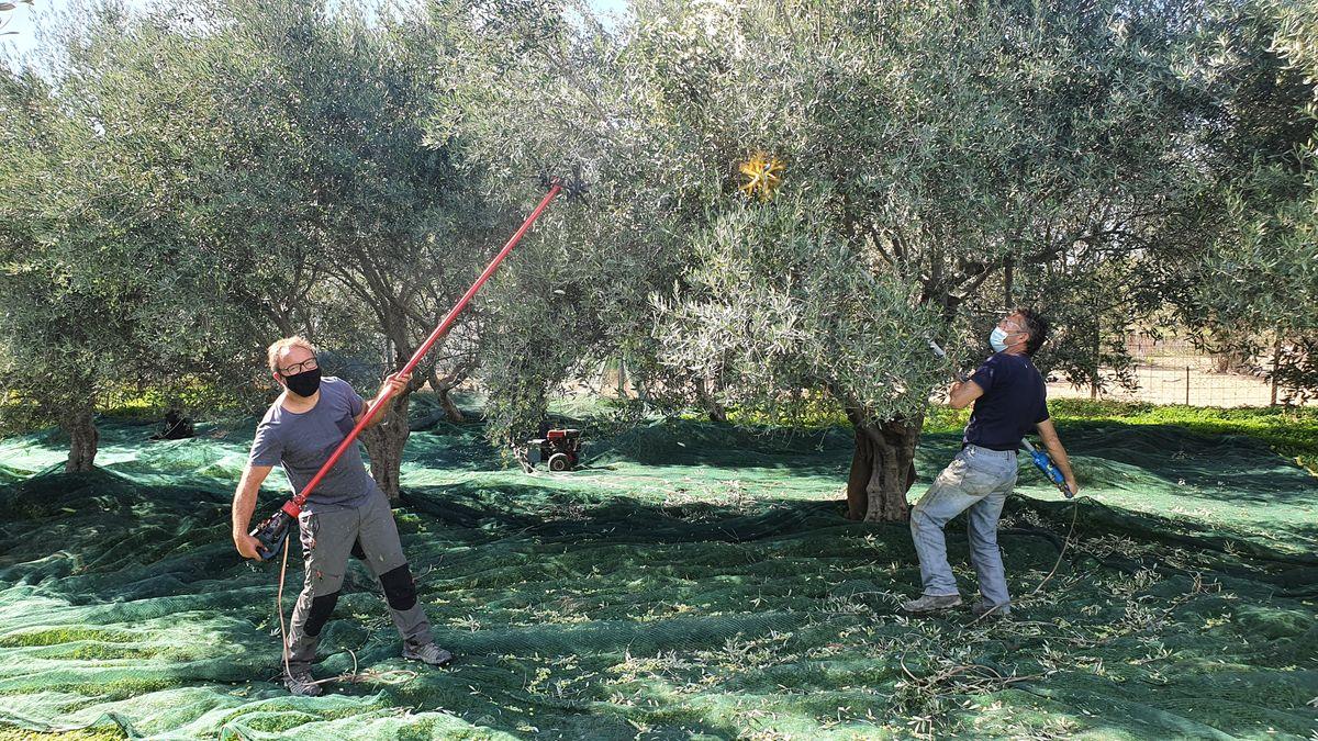Kreta - Lockdown in Kamilari - Olivenernte