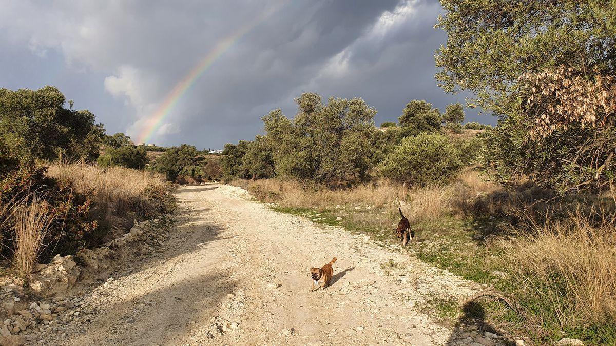 Kreta - Lockdown in Kamilari - Spazieren mit Hunden