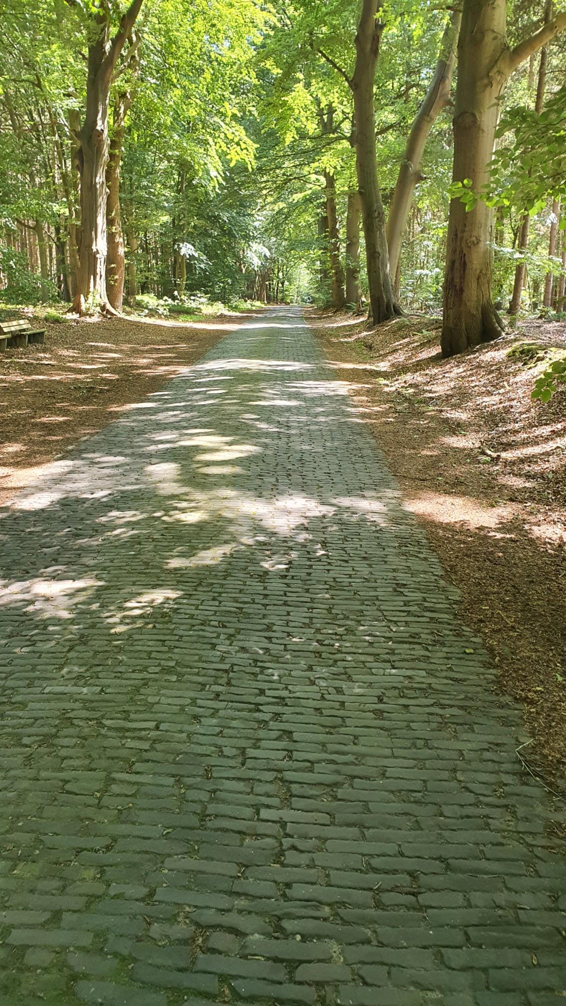 Radweg bei Beverstedt