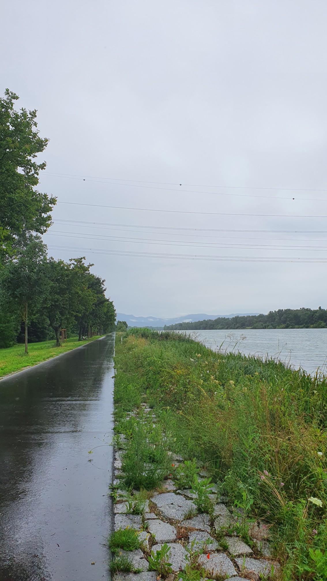 Bei Breisach am Rhein