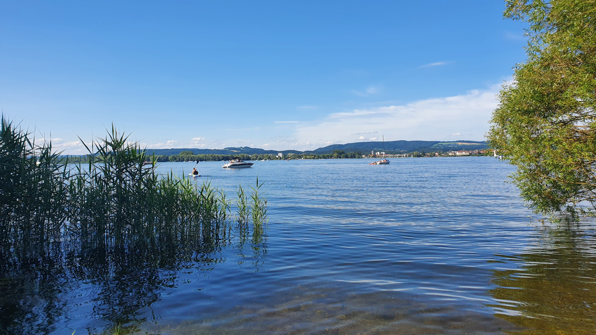 Moos am Bodensee