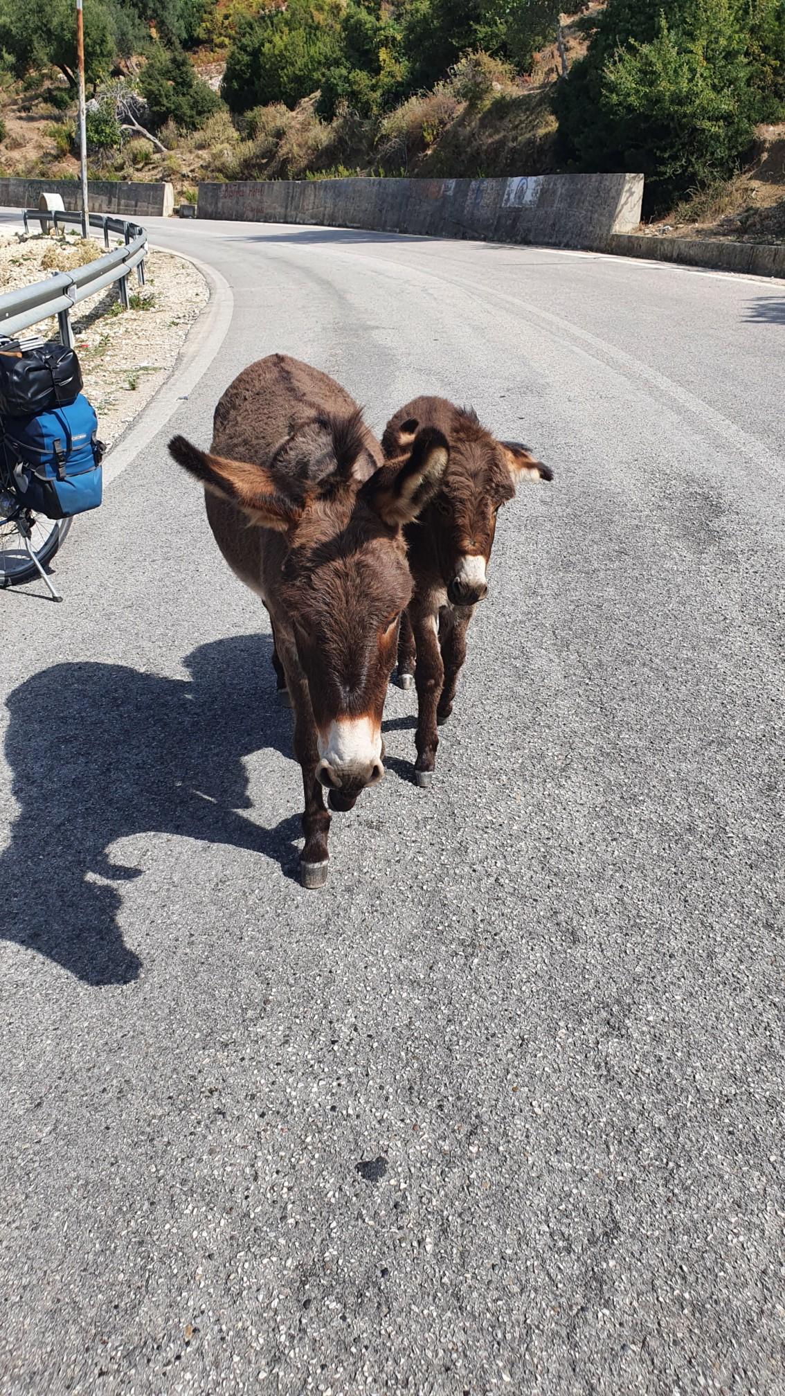 Neue Freunde bei Piqeras