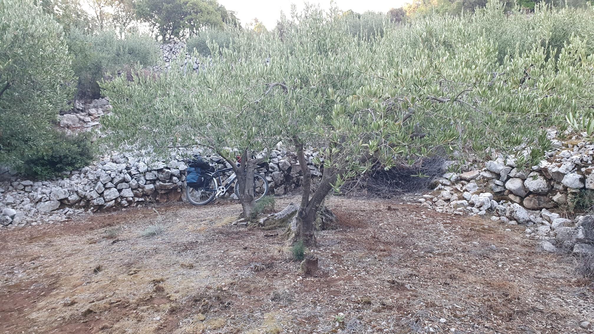 Olivenhain zum Wildcampen